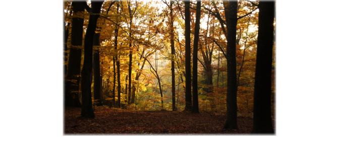 Sauver la forêt publique française et les emplois de la filière bois
