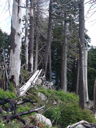 forest-dieback-556148_1920.jpg